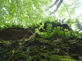 Green Smiles by irrationalrationale