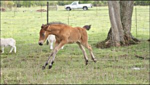 Pixie Foal Stock - 3 by ForgottenSky-Stock
