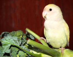 Pippin on Broccoli by emmil