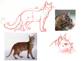 """Cat Practice"" RedLined by katanimate"