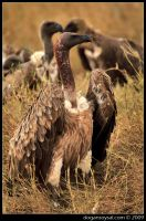 VULTURE CULTURE - I by dogansoysal