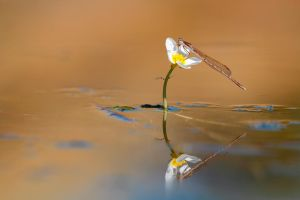Delicate reflection by buleria