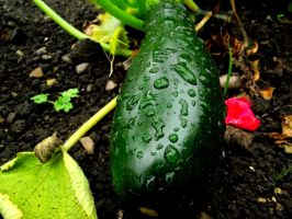 Courgette/Zucchini by D1scipl31974