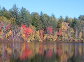 fall reflections 3 by crazygardener
