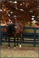 Stance by Phantom303