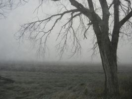 Tree Edge In Fog-cvr-deviant by sfishffrog