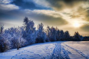 hoar frost plus filter by ThorBet