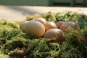 Easter Stock 14 by Malleni-Stock