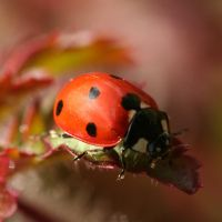 ladybird 1 by evelynzee