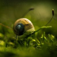 Little Snail . II by Somebody--else