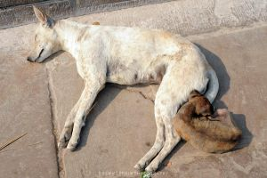 Sleeping Dogs by drewhoshkiw