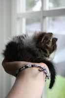 Just a hand full by picsbyme