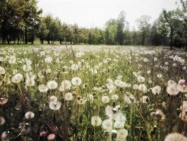Softness by Sciacca-Sciacca