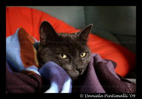 Duc: Blanket by TVD-Photography