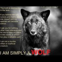 Simply a Wolf by samm4415