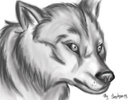 Wolf by Sapphires245