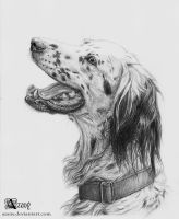 English Setter by Azany