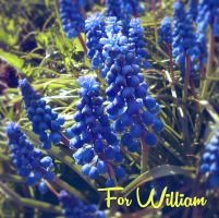 For William by Sisterslaughter165
