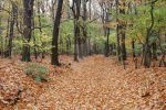Forest Path.. by DvS-Design