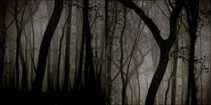 FOREST III by mikeb79