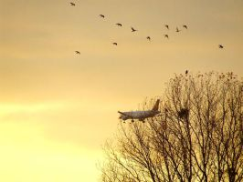 Evening flight by Tricia-Danby