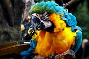 colorfull parrot by MoA07