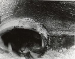 Storm Drain Kitty by Sadeira