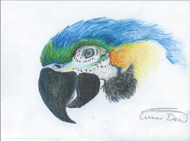 Macaw Colored Pencil Drawing by foxspitt