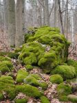 winter moss by wam17