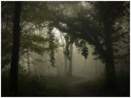 Misty forest ... by MOSREDNA