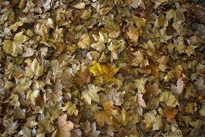 Autumn Carpet by MinnaSD
