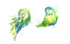 Budgies IV by amwah
