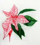 XMAS PLANT DRAWING by alexblur8