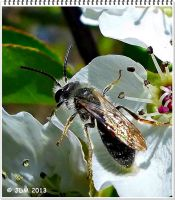 Spring Insect by JDM4CHRIST