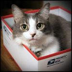 Priority Cat by TeaPhotography