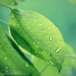 deliciousgreen by PatrickRuegheimer
