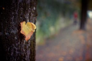 Autumn leaf by jorago