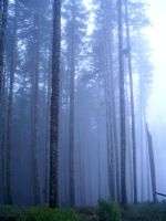 Forest Surreal ... part III by chamois-shimi