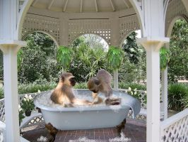 Monkey Spa by Loulou13