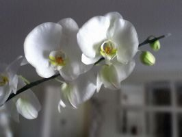 OrchidArt by 02DigiDesign