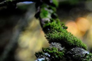 It's a Mossy Life by Ellie-S