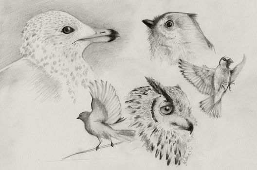 Bird sketches by imaginary0