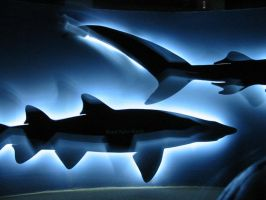 Glowing Sharks by mxtheory