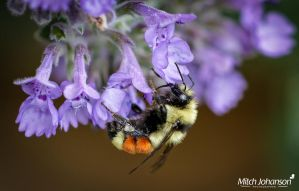 Cover Me in Pollen by mjohanson