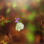 The Free Butterfly by Healzo