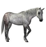 STOCK PNG horse dapple grey by MaureenOlder
