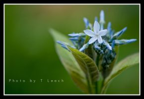 Beryl Luster by tleach0608