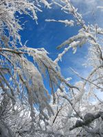 AthenaStock: Snowy Branches 8 by AthenaStock