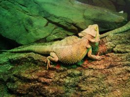 Reptiles by Heavymedicated