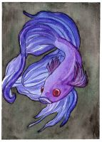 Betta Fish by agataylor